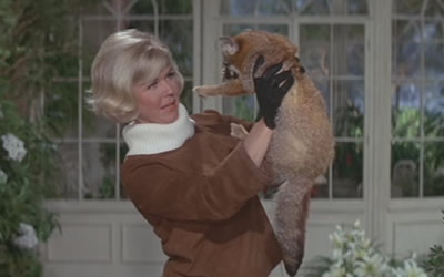 Doris Day rescues a fox from a hunt and then ends up adopting it. I wonder if the actress's real-life fondness for animals inspired the script.
